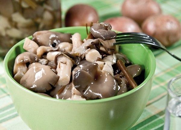 Как готовить грибы вёшенки