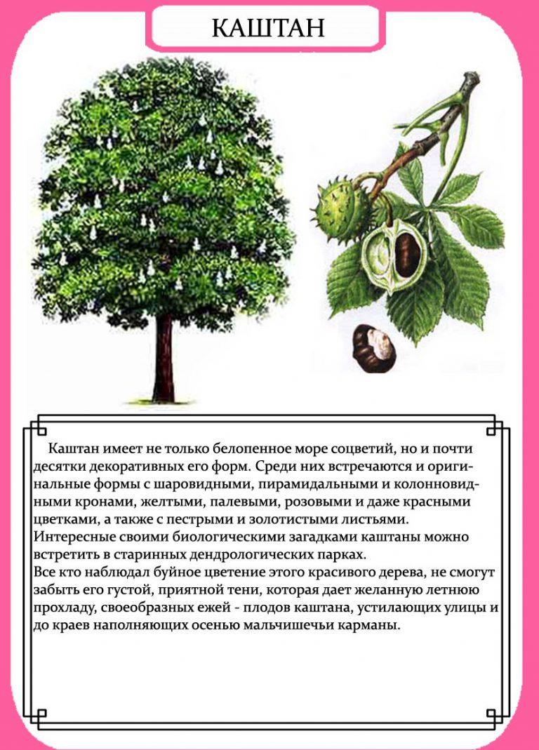 Строение Дерева. Листья Деревьев.