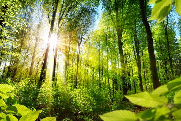 Пословицы и поговорки про лес