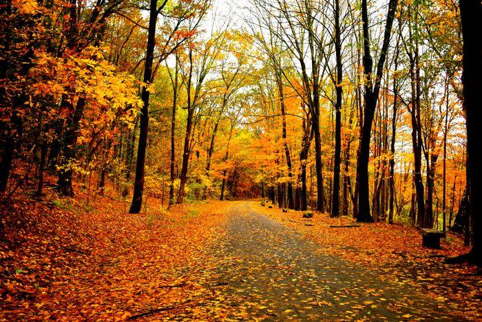 Пословицы и поговорки про октябрь